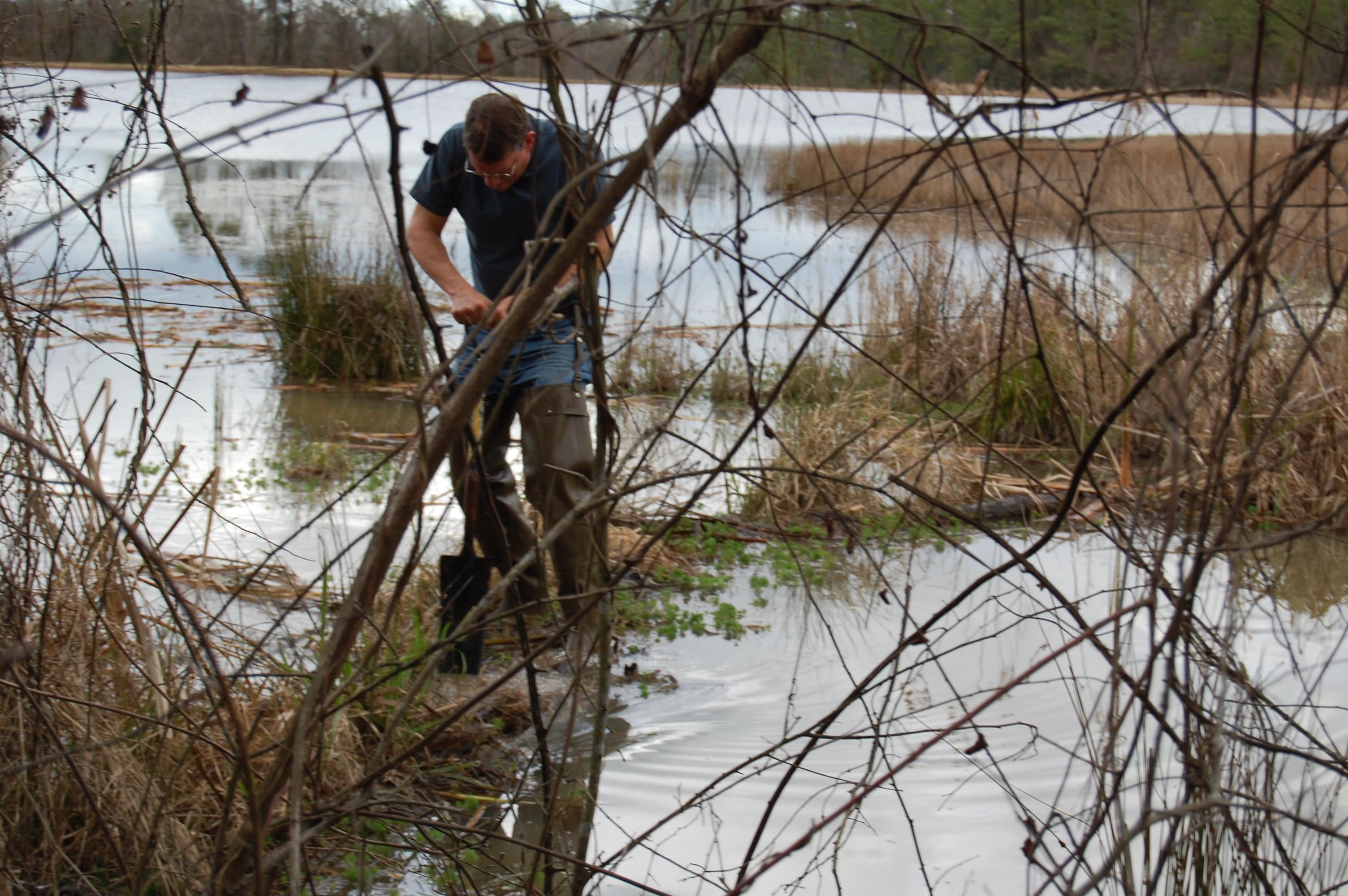 Ken digging hole in beaver dam