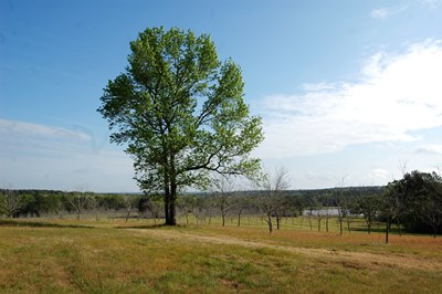 View across orchard