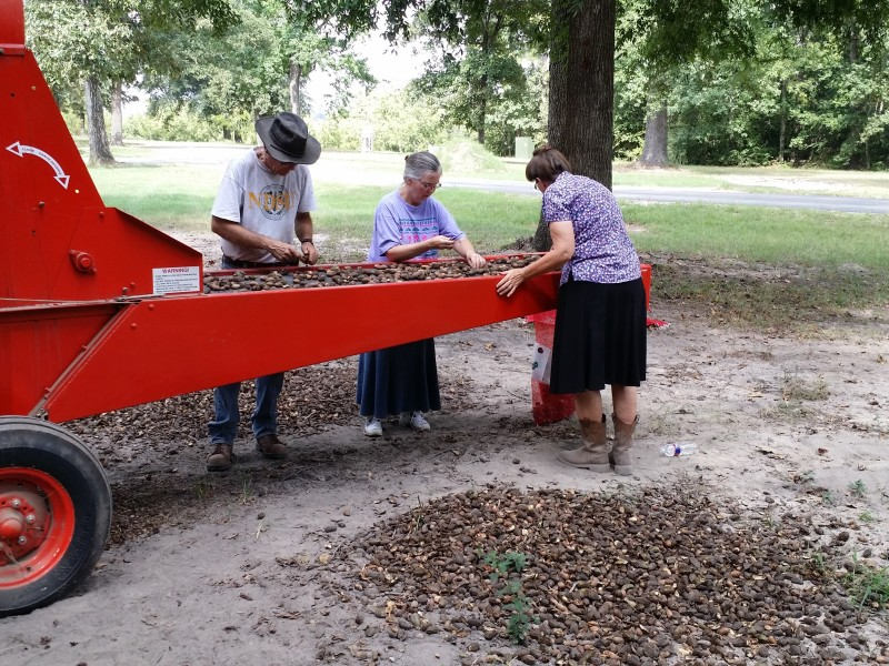 Overbys and Kathy Cleaning Pecans