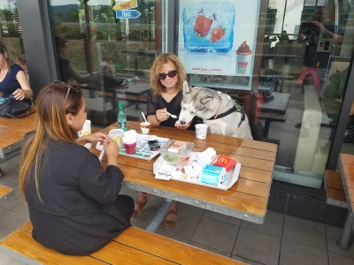Dog at McDonalds