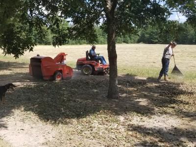 harvesting-pecans