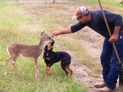 bambi-sandy-samuel